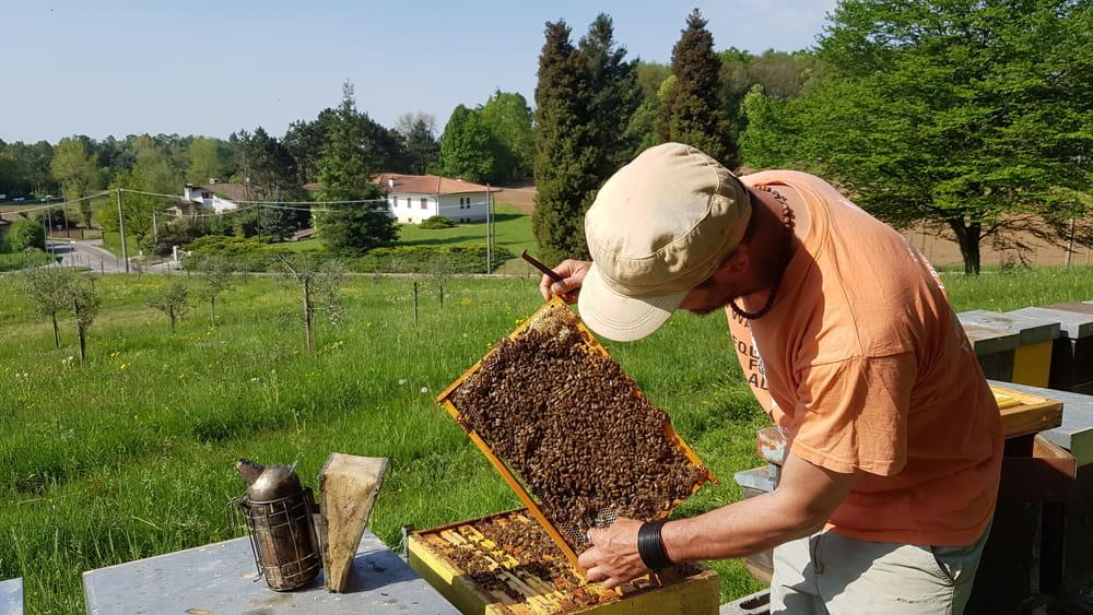 Moria di api, a rischio la produzione di miele del 2018 anche in Fvg